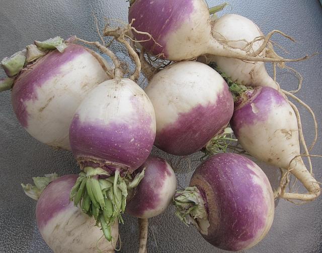 Harvest Monday – November 14 | Our Garden Plot
