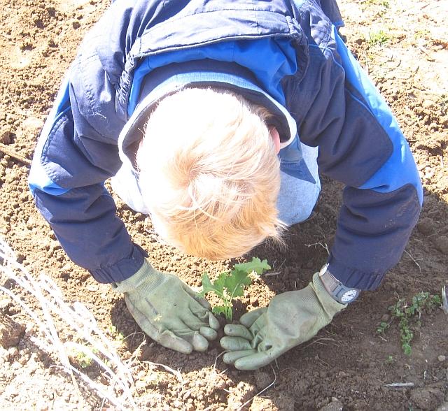 firstdayplanting2
